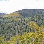 Sante Fe National Forest
